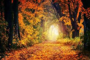 Forest in autumn colors photo