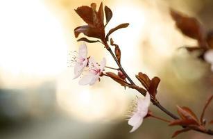 flores silvestres em tons pastéis na natureza foto
