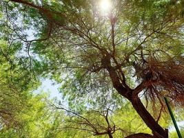 Wide angle view of trees from below
