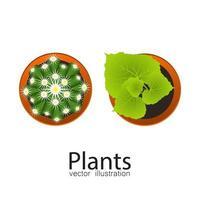 vista superior de plantas en macetas