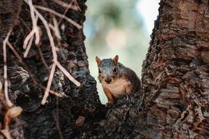Squirrel staring at camera