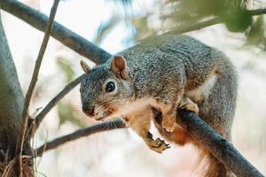 Squirrel hanging on branch