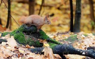 esquilo em um galho coberto de musgo
