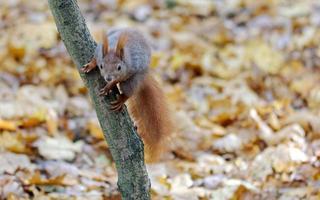 esquilo em um tronco de árvore