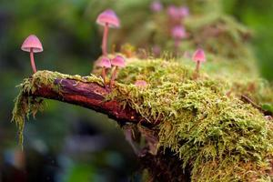 Mushrooms on a mossy tree trunk