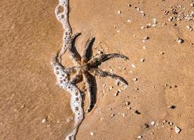 Black starfish on brown sand photo