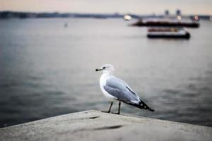 Seagull perched near water photo