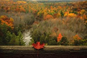 Maple leaf on a wooden rail in front of a forest