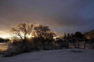 Sunlight through the morning trees photo