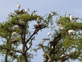 cigüeñas de madera en un árbol