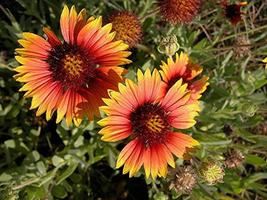 flores silvestres vibrantes
