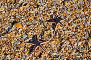 Starfishes on the pebbles