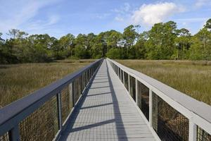 Boardwalk over the marshland photo