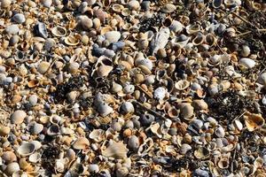 Beach shells background photo