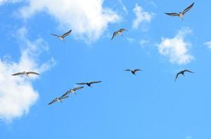Flying seagulls in Florida