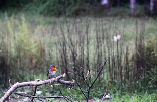 Bird resting on tree limb