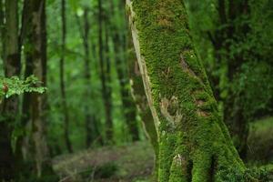 árbol verde en la selva