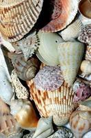 conchas de praia coloridas