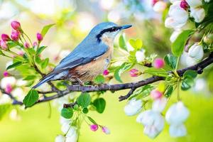 Little bird on tree twig with flowers