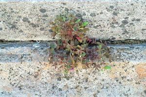 planta cultivada entre tábuas de pedra