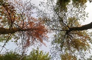arbres forestiers en automne photo