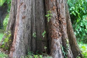 tronco de árbol de bajo nivel