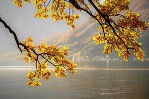 paisaje otoñal con ramas de árboles sobre el agua