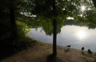eenden ontspannen op de oever van het meer tijdens zonsondergang