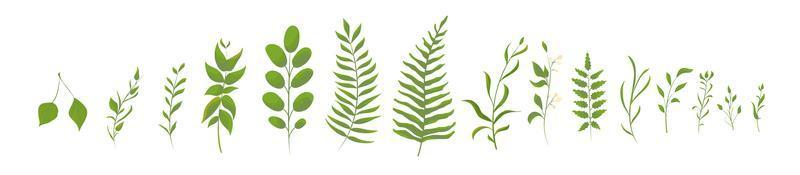 Collection of green forest fern, tropical green leaves vector