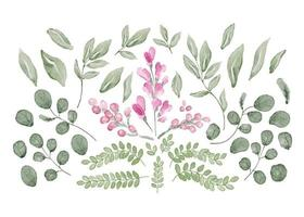 Collection of Leaves and Flowers in Watercolor vector