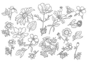 Collection of Outline Wild Flowers vector