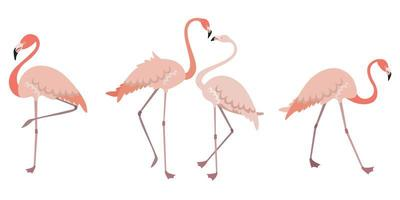 Set of flamingos in different poses vector