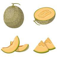 melón entero y en rodajas vector