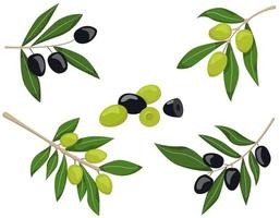 Set of olive branches vector