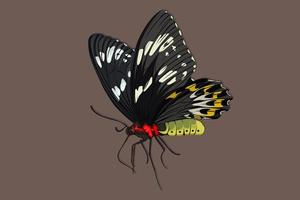 dibujo a mano realista mariposa negra vector