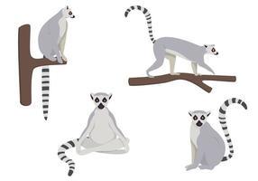 conjunto de lémures en diferentes poses. vector