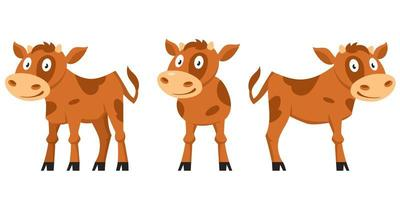 Calf in different poses