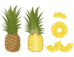 Whole and sliced pineapple set vector