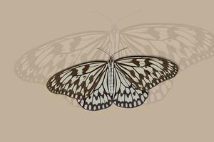Gray and brown butterfly hand drawing