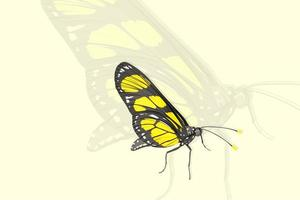 Yellow butterfly realistic style hand drawing
