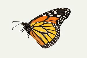 Side view of orange and yellow butterfly, hand drawing vector