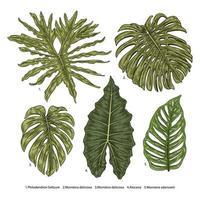 filodendro vintage, alocasia, conjunto de hojas de monstera vector