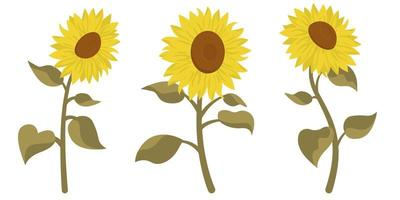 Sunflower in different positions vector