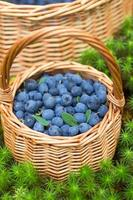 Ripe juicy blueberries and honeysuckle photo