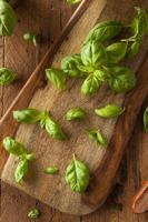 albahaca verde orgánica cruda foto