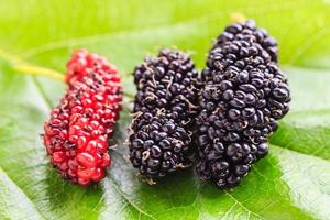 Group of mulberries