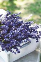 Lavender flowers in white tray