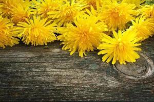Dandelions on wooden background photo