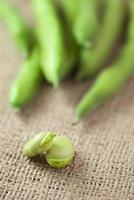 broad beans photo