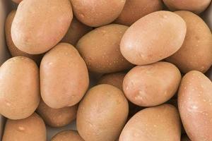 Harvesting potatoes in summer
